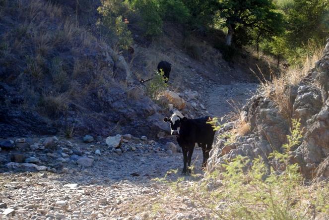Trail companions.